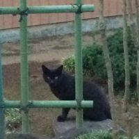 図師町の黒猫
